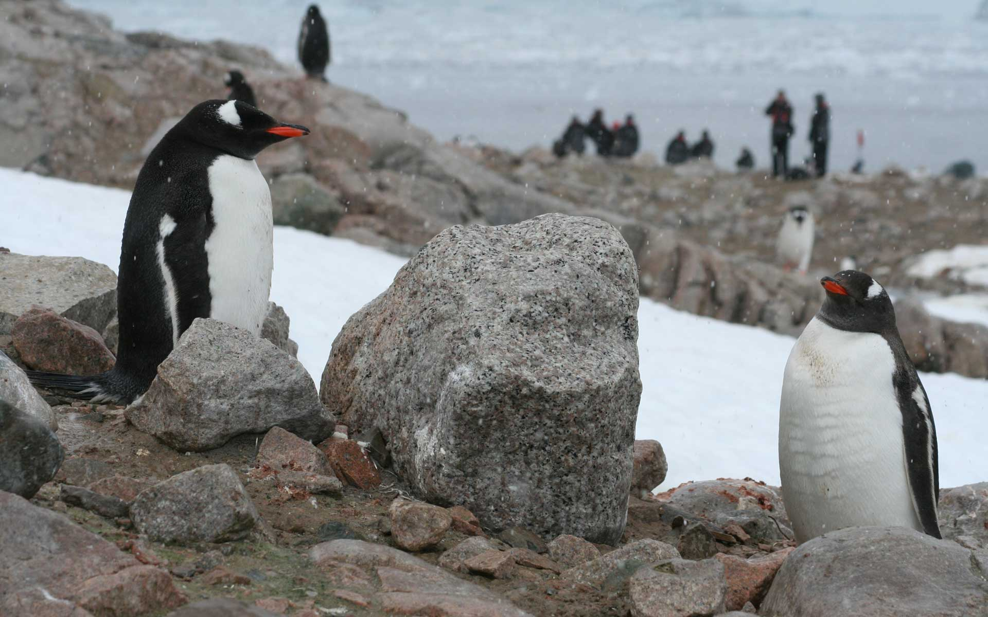 mit Pinguinen in der Antarktis ...
